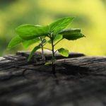 Início e fim: sejamos aprendizes da sabedoria dos ciclos